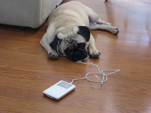 Dog listening to iPod!